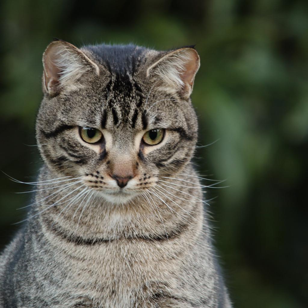 вирус фото серые большие коты самые