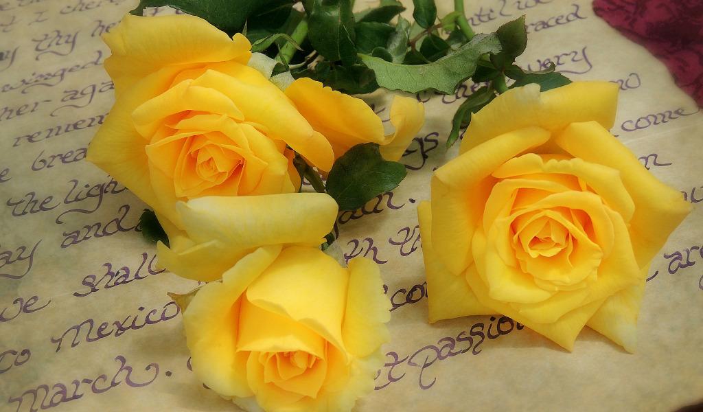 Плейкаст для тебя красные розовые желтые цветы большие открытки