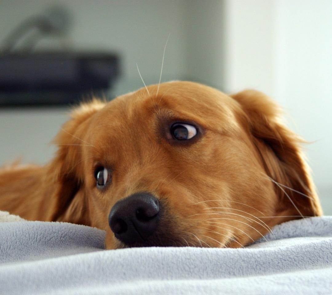 странные собака печальная фото церкви также