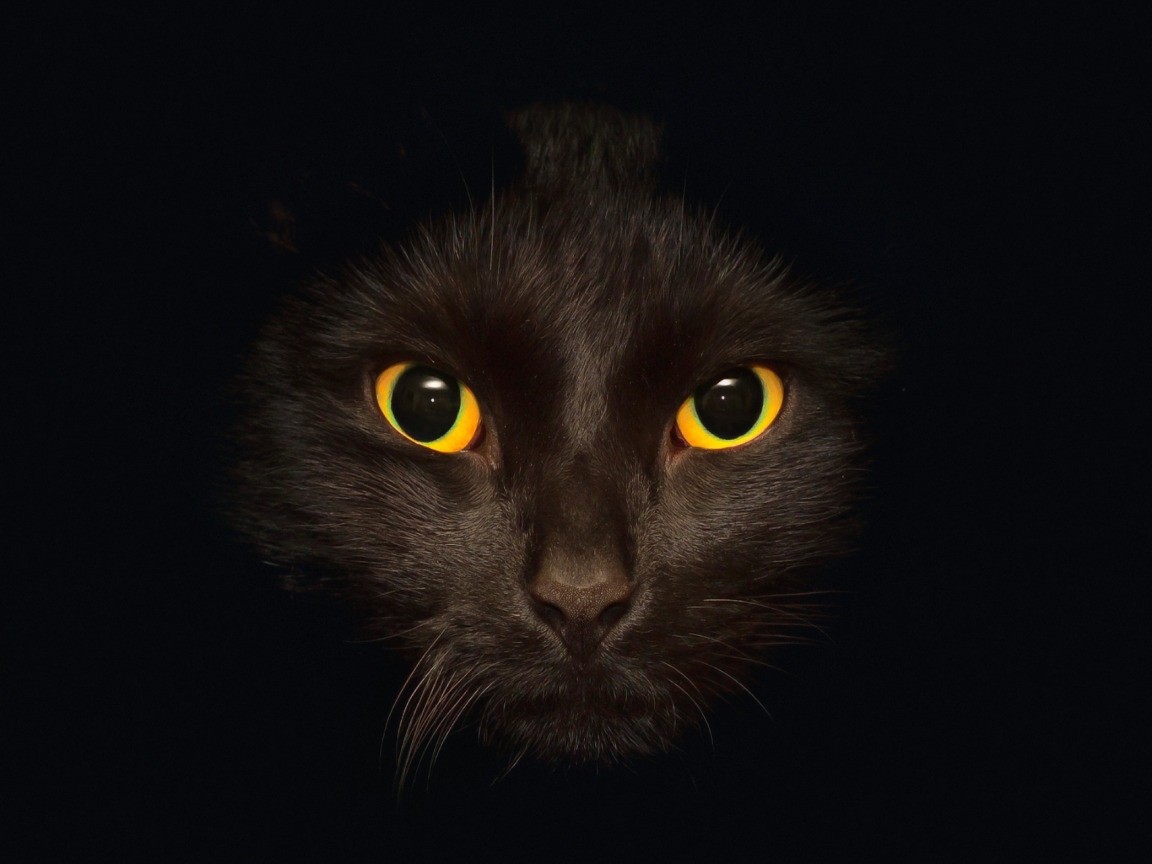 обои на рабочий стол глаза кошки на темном фоне № 237961  скачать
