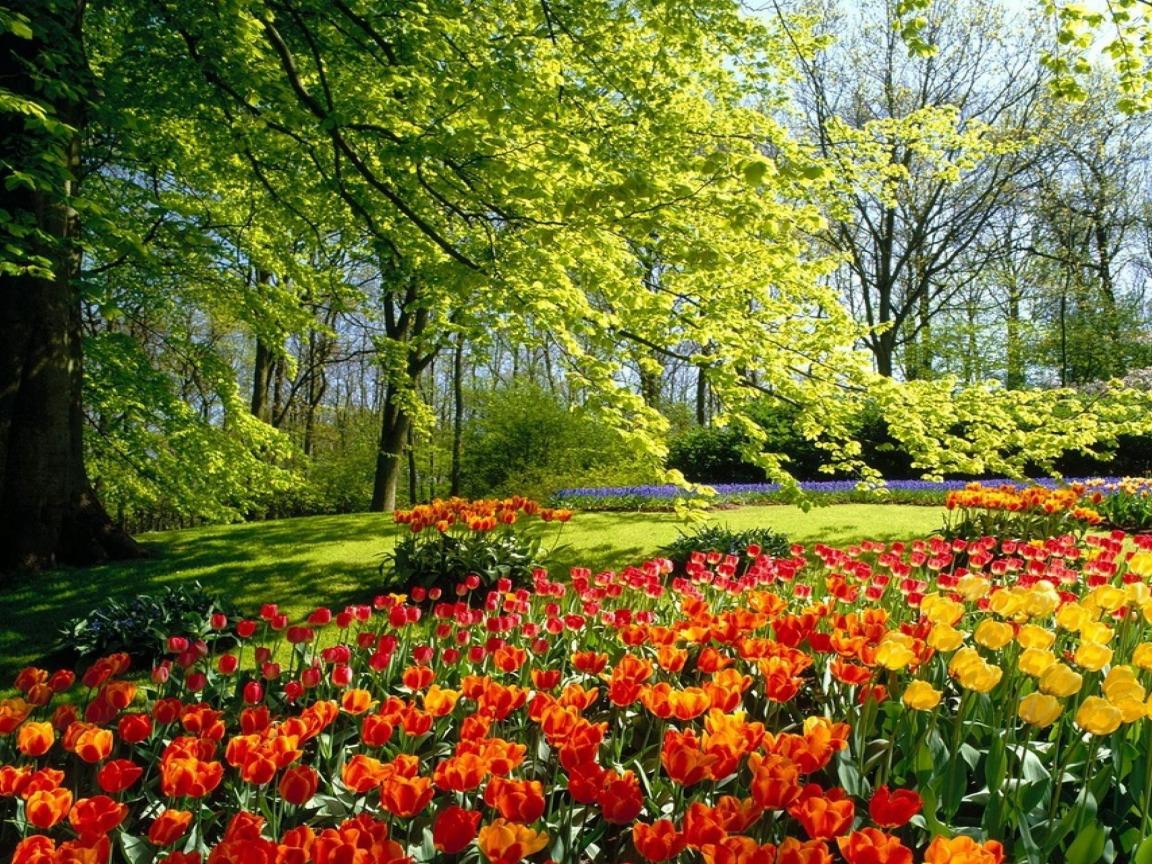 картинки весна для компа вами промелькнёт