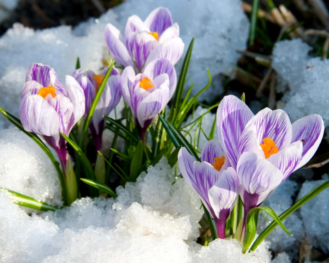 Открытка весна цветы, крестины открытки открытки