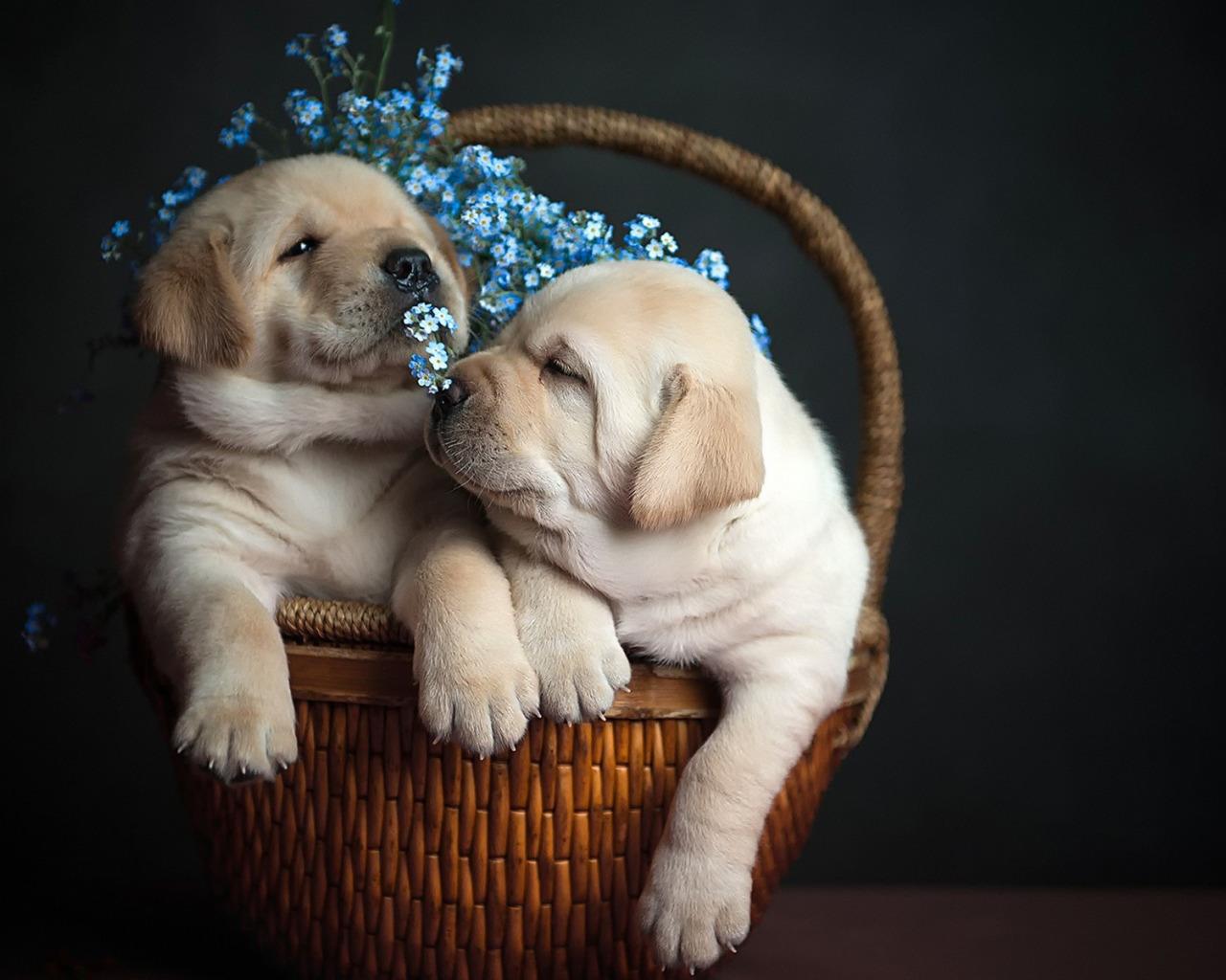 Дню пожилых, открытки музыкальные собаки