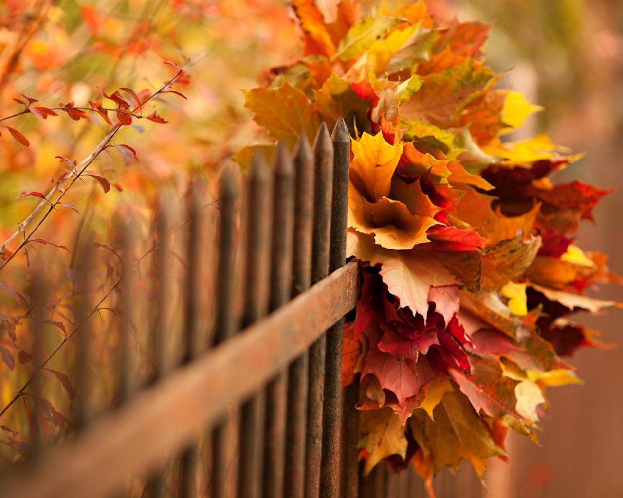 Картинки осень красивые с надписями с добрым утром
