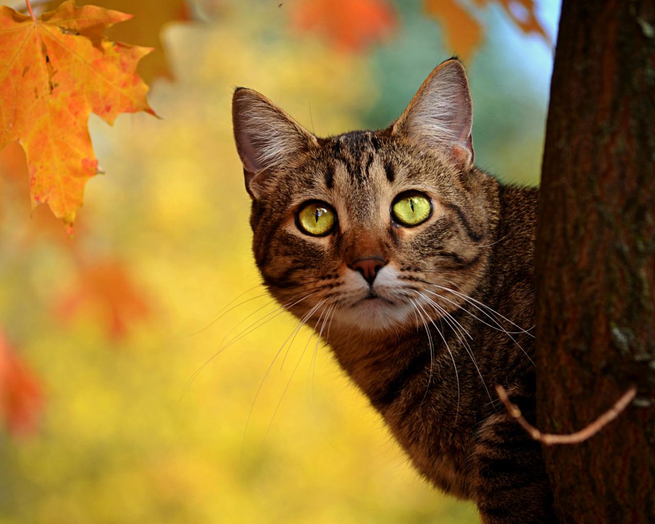 кошка осень листва  № 3898545 загрузить