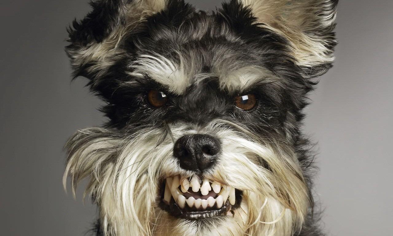 хитрые собаки могут врать