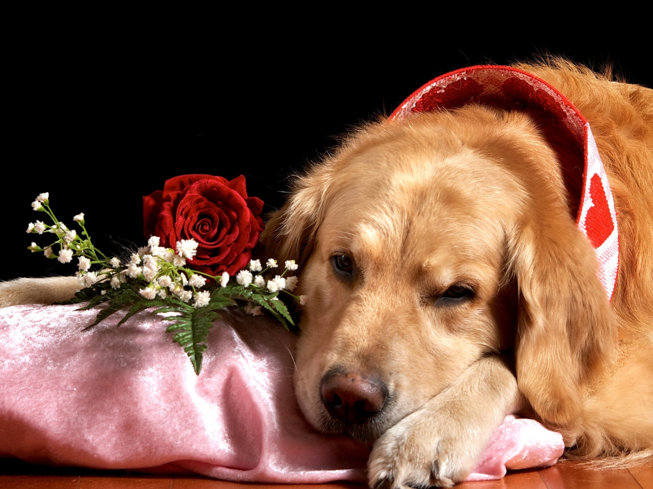 луитпольскую щенок с цветами в зубах фото один тех мультиков