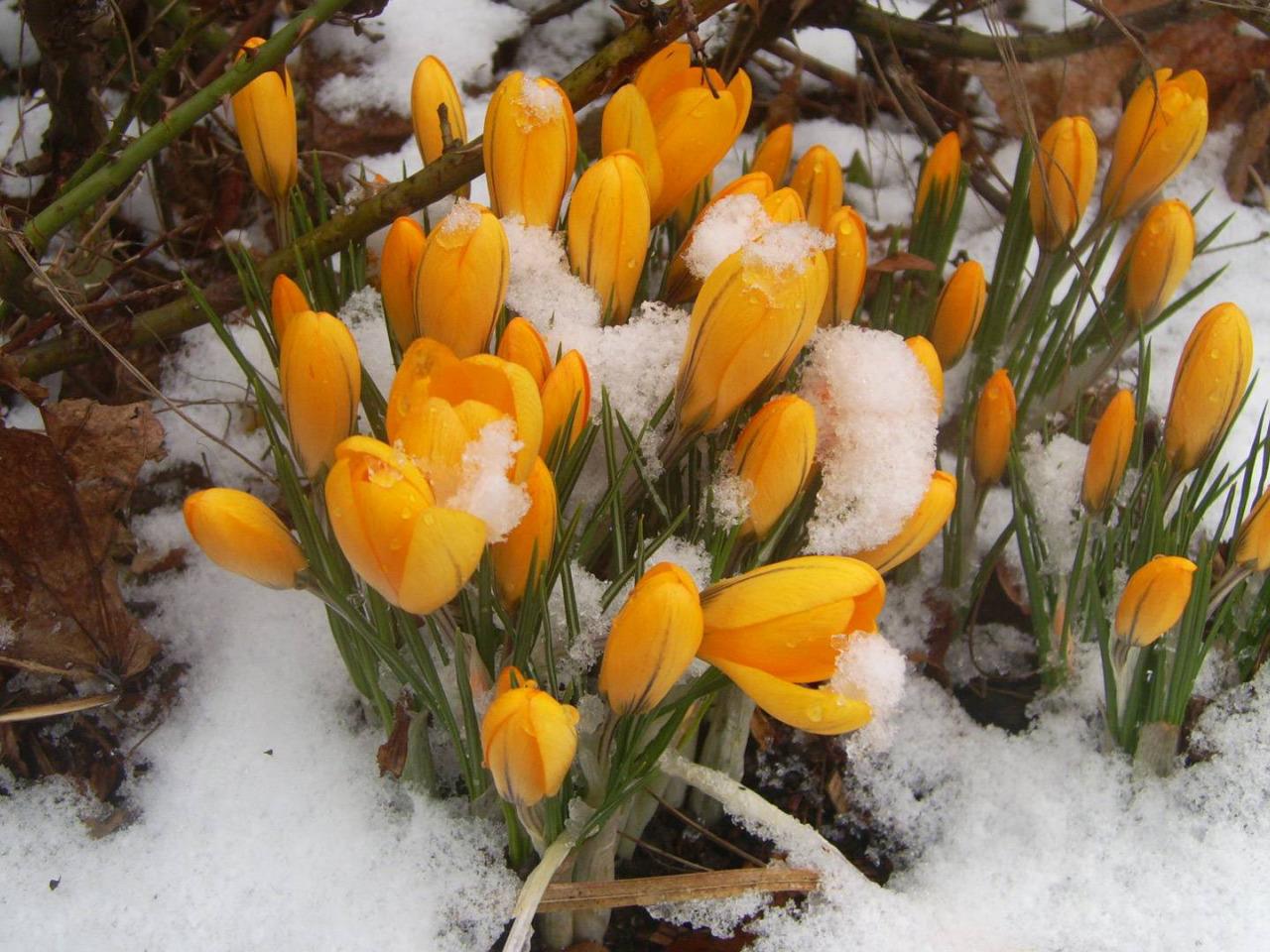нас было красивые весенние фото март качество