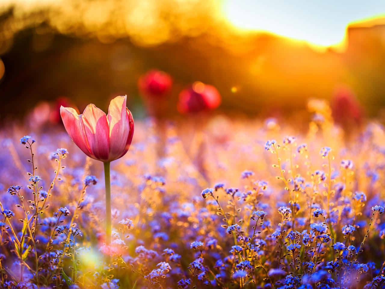 Фото цветы полевые на закате