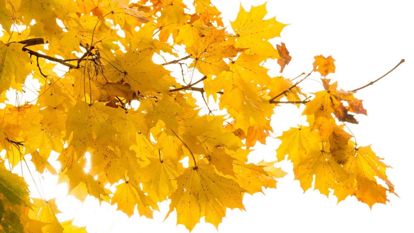 listia-priroda-osen-2.jpg