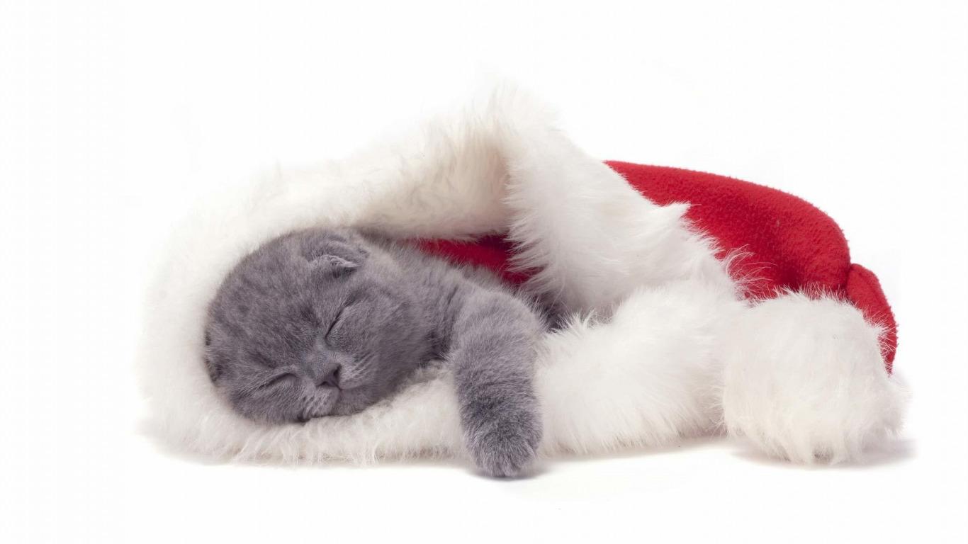 Кот под шапкой  № 3059127 без смс