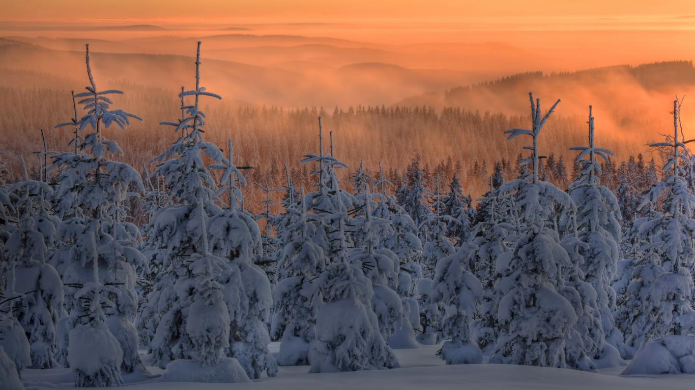 zima-sneg-eli-elki-les-tuman.jpg