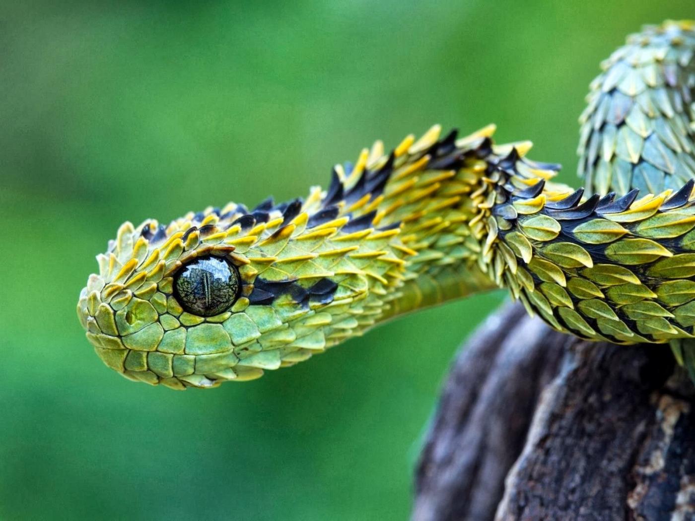 все животные мира фото змея перезвонит менеджер компании