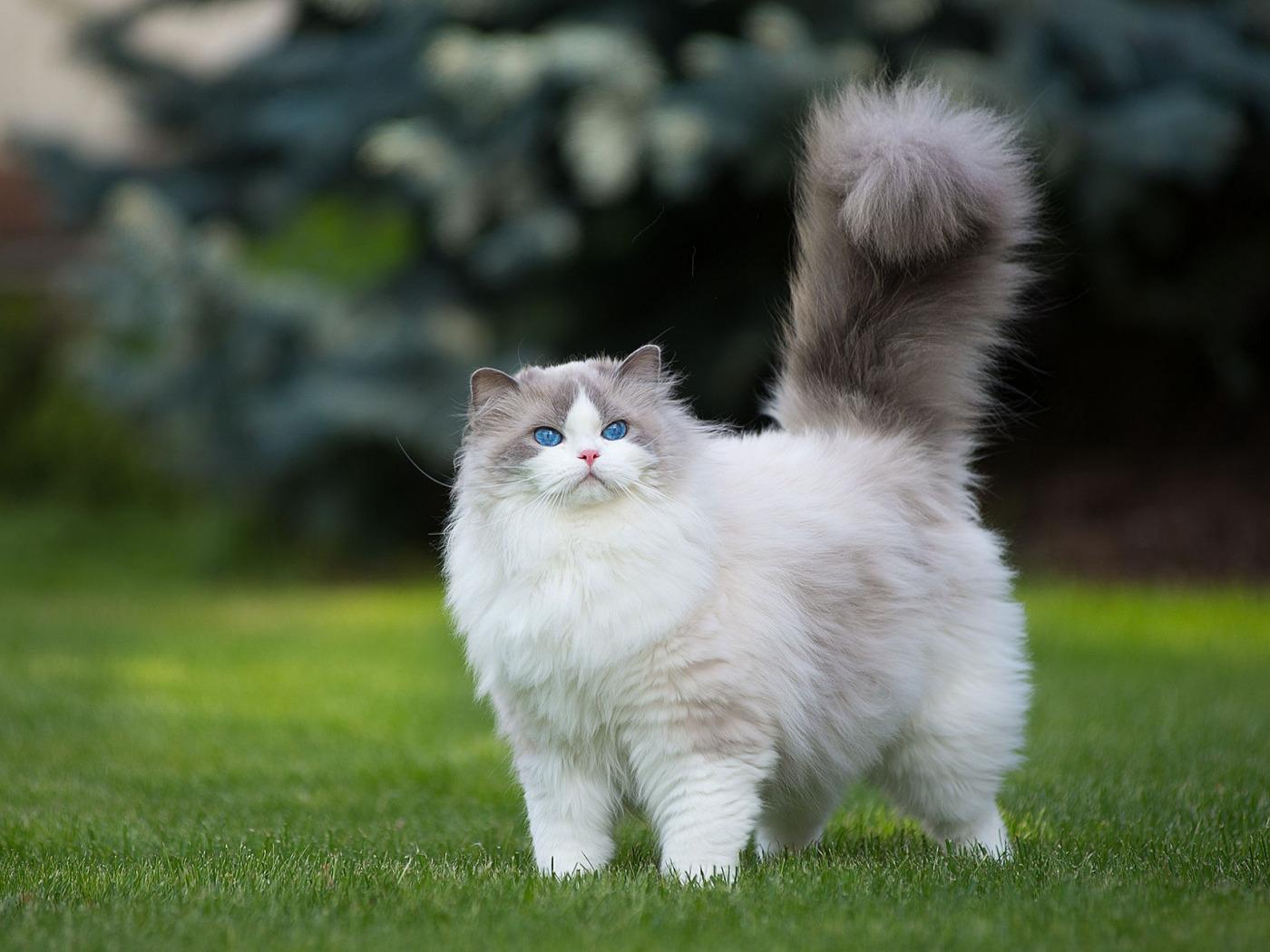 самые пушистые котята в мире фото касается второго