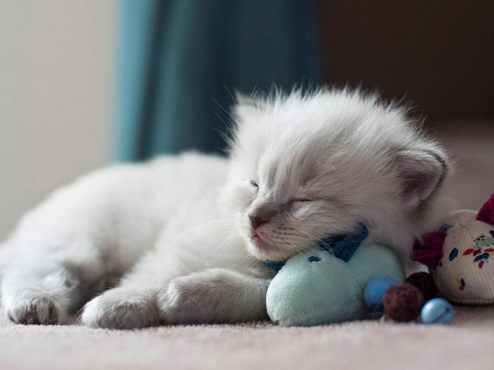 Картинки котик спит с игрушкой, юбилеем