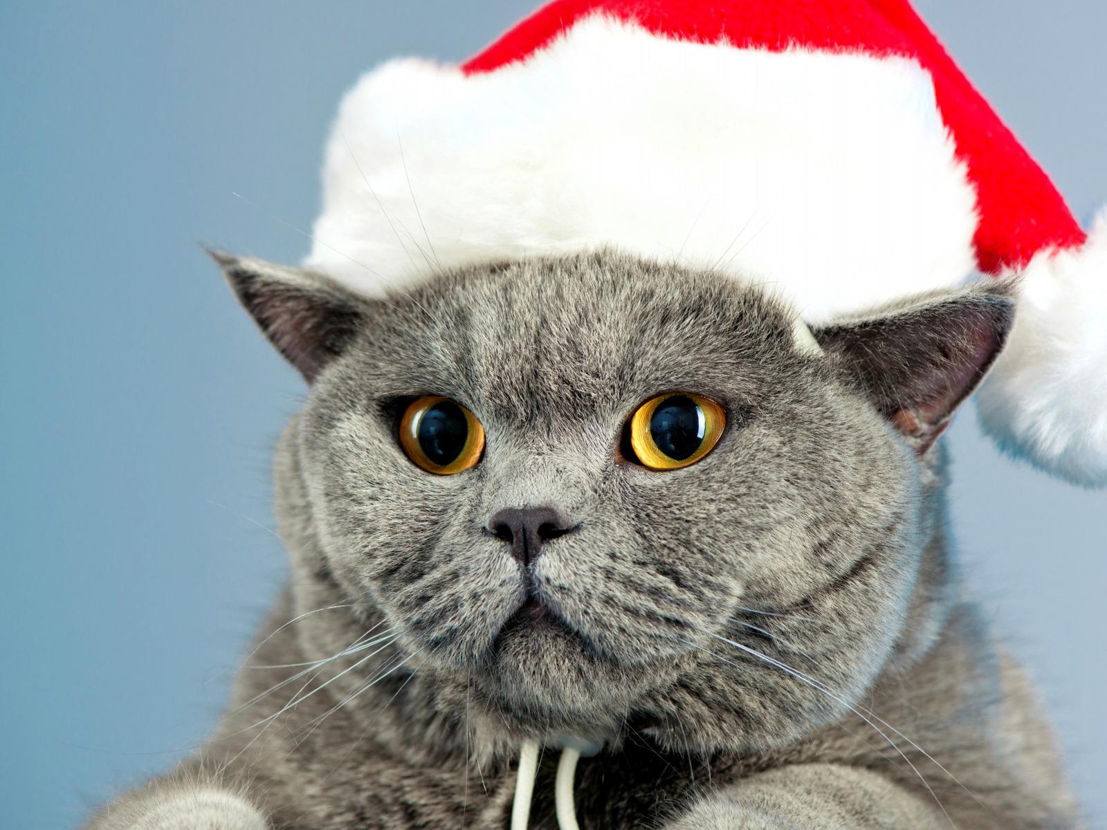 Днем, смешные картинки с котами новый год