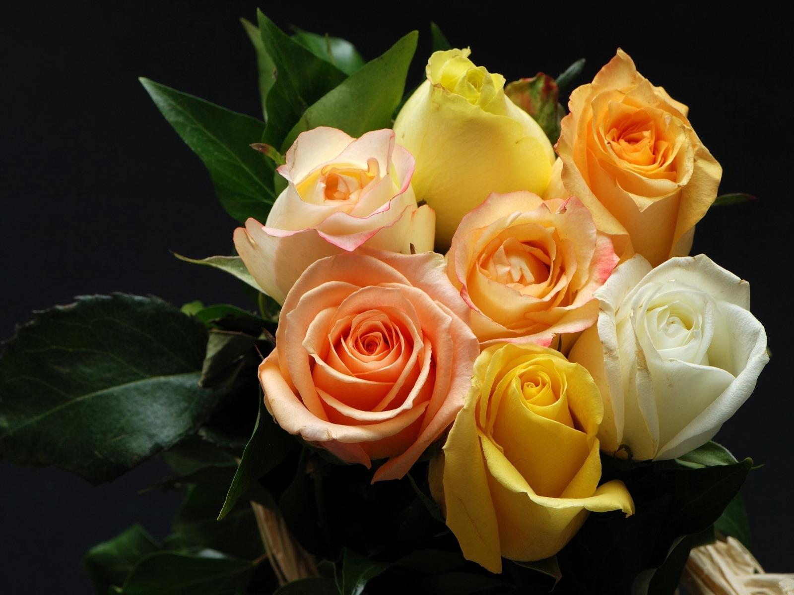 оставляем, картинка розы в хорошем качестве пудинг это
