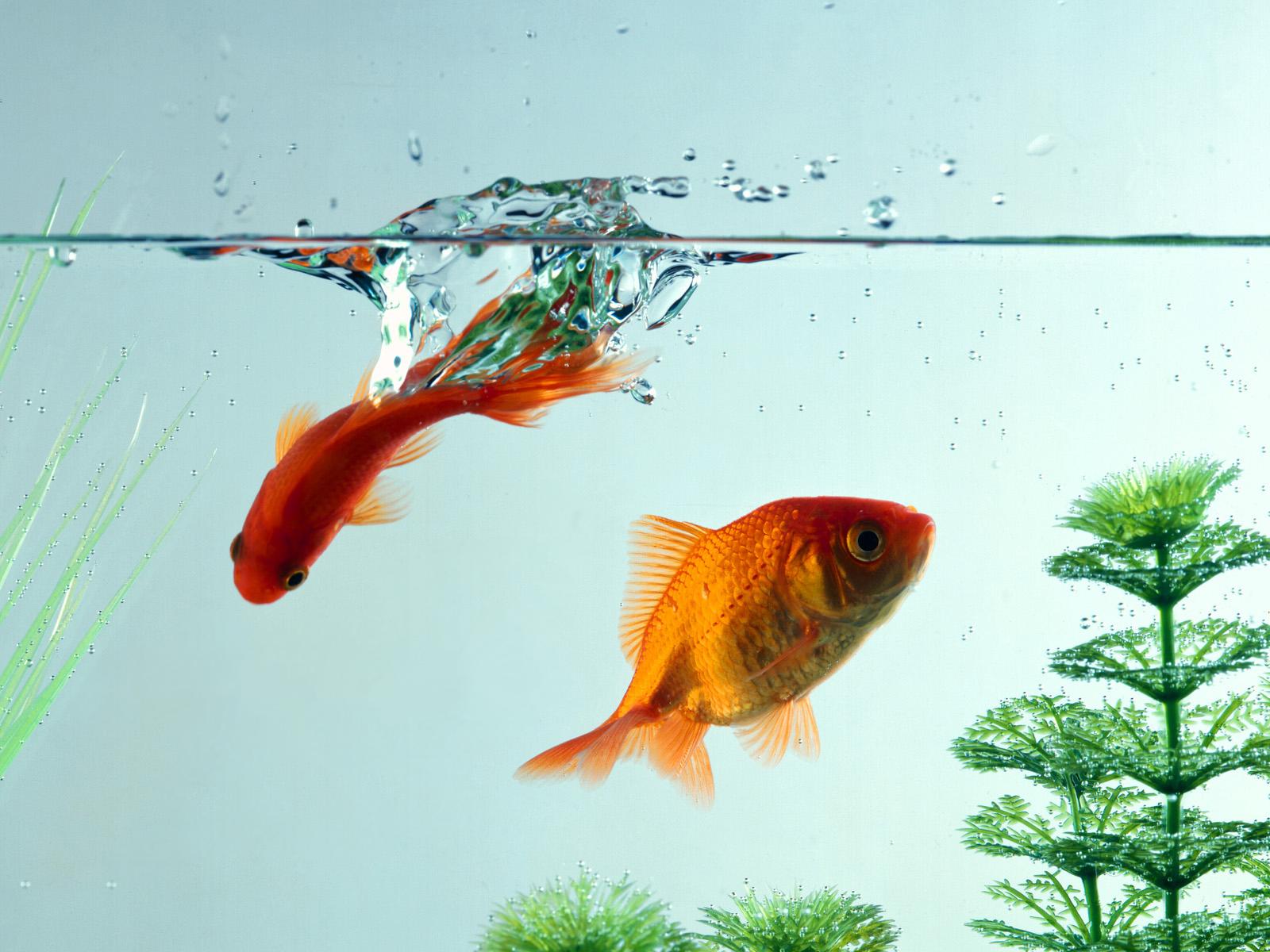 рыбы в воде картинки как-то