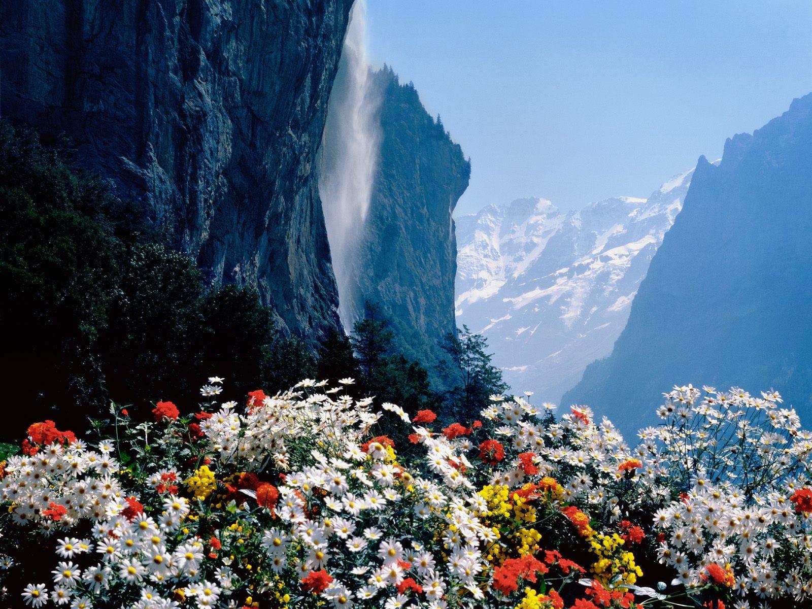 картинки горы цветы вода снег красивые дали