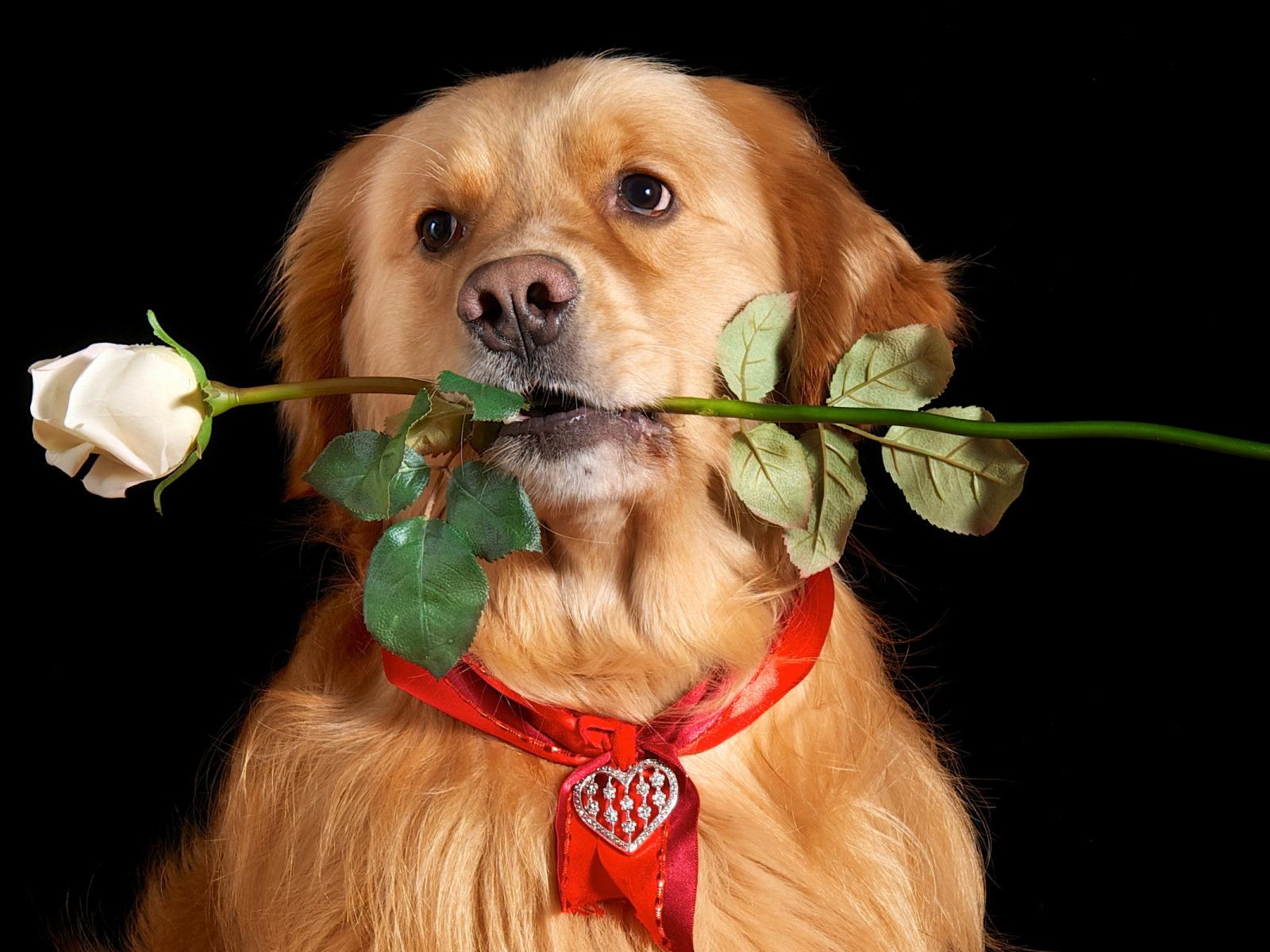 Открытки для поздравления собаки, тебя