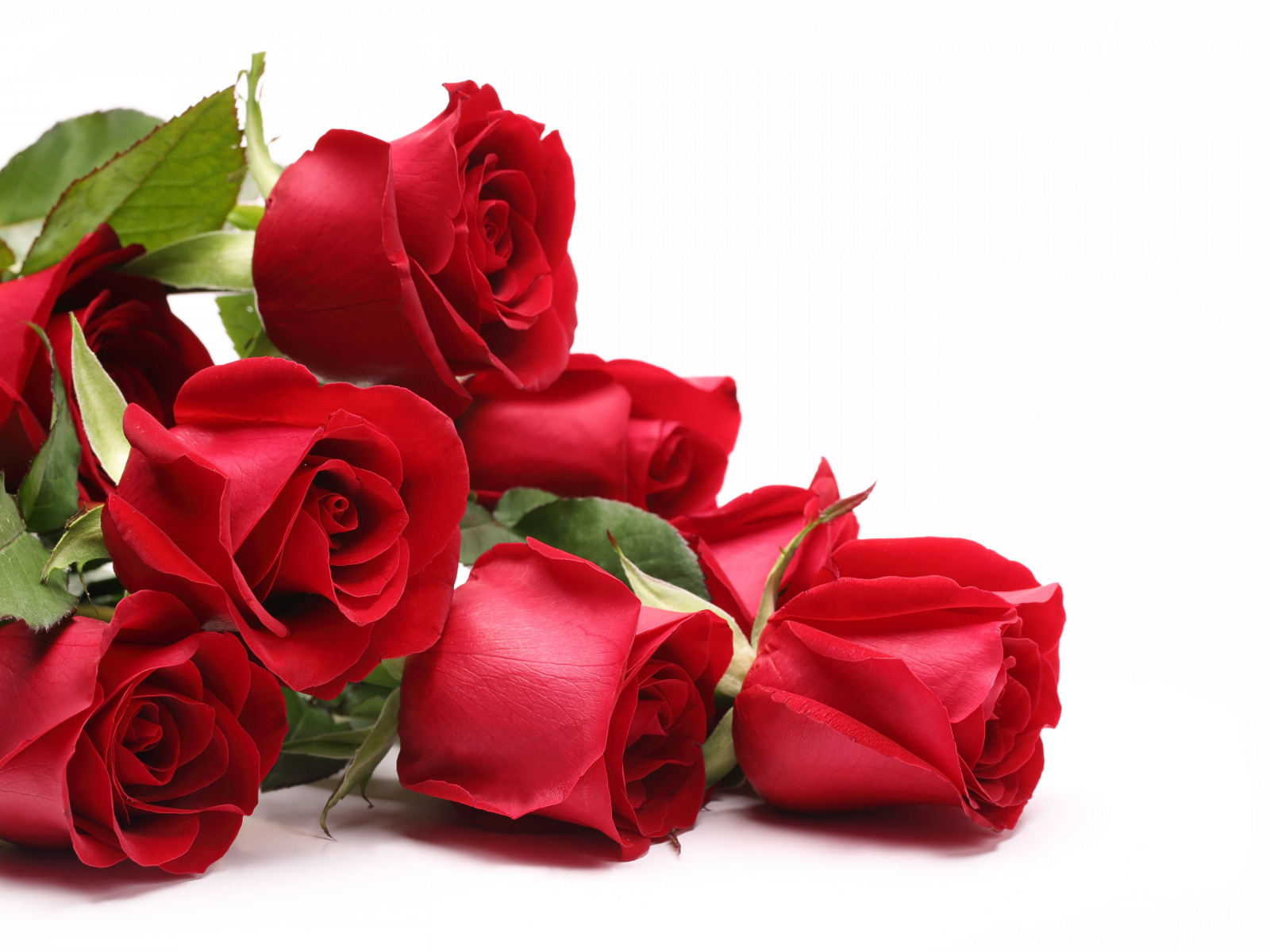 Дочки открытки, открытки розы любимой