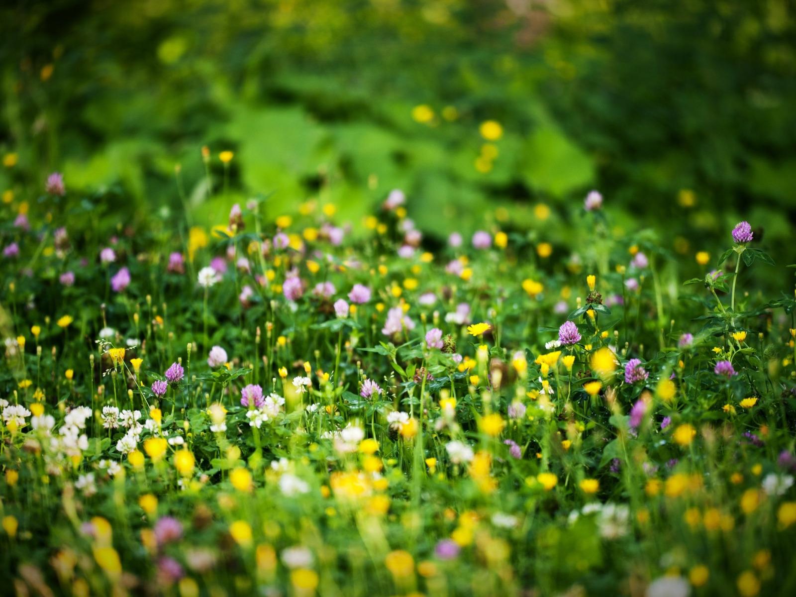 картинки для рабочего стола трава цветы