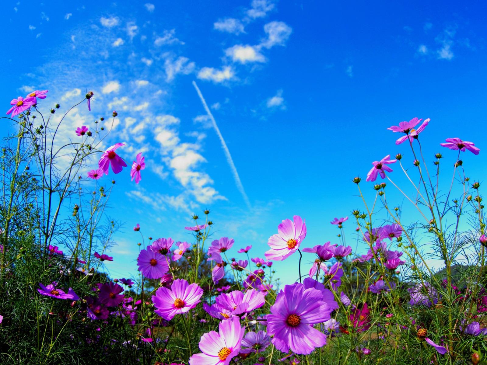 Фото с небом и цветы