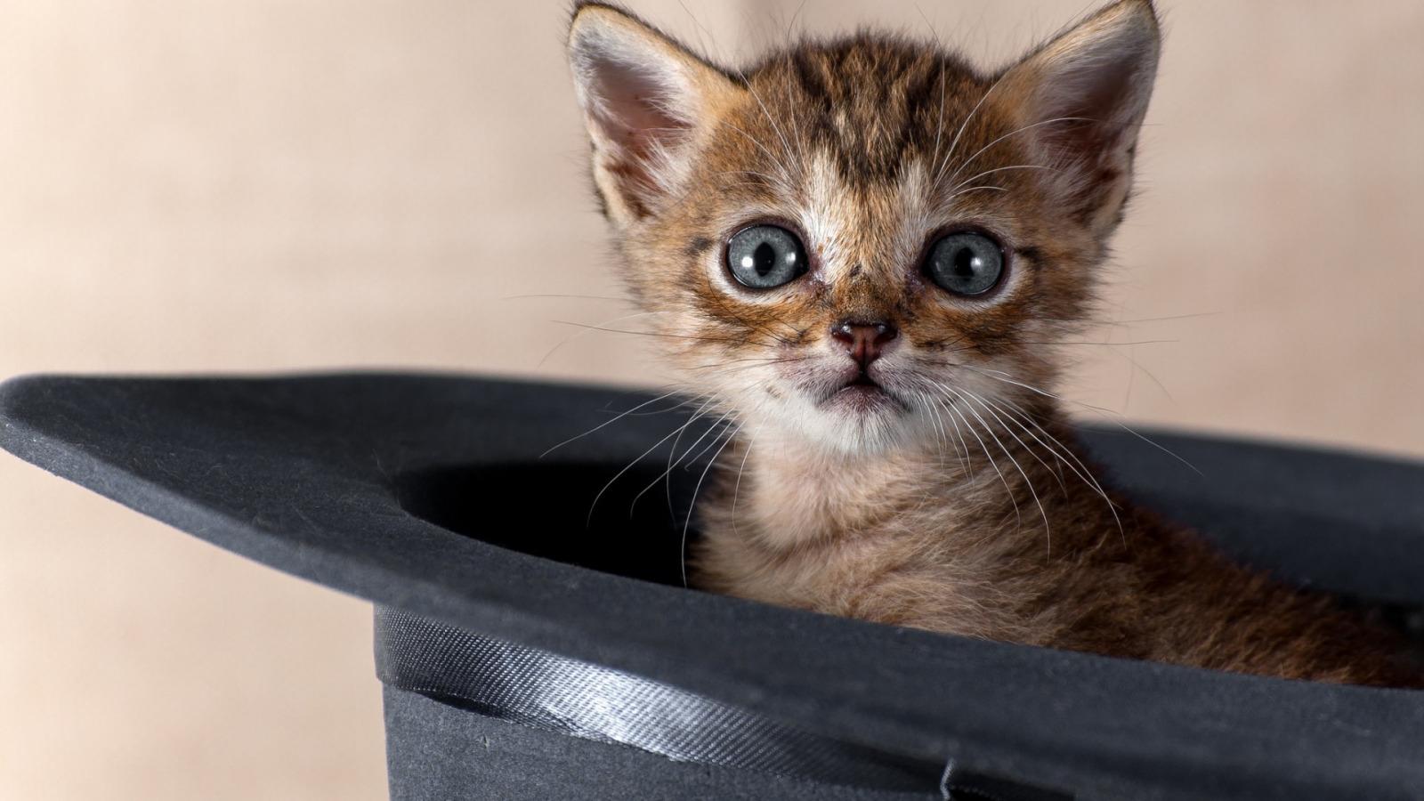 Картинки котенков смешные