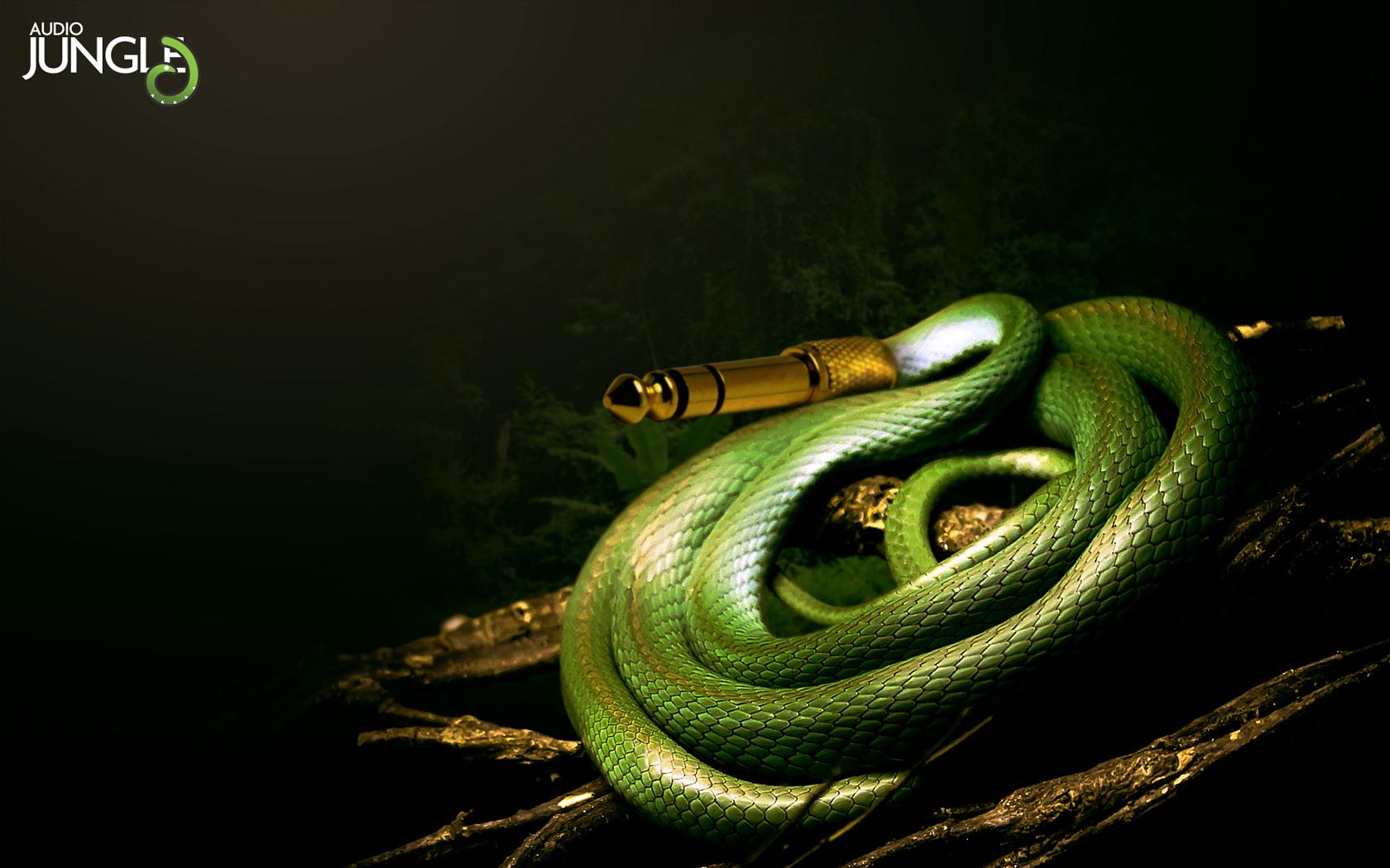 Скачать обои музыка, джунгли, змея, раздел разное в разрешении ...