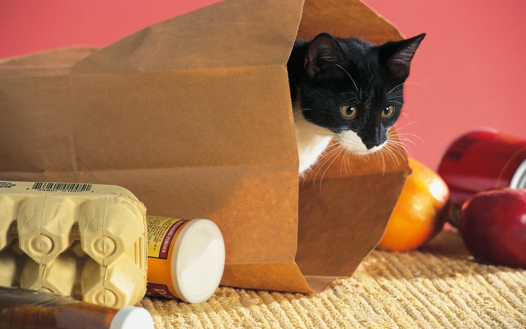 собака пакет сумка  № 1143285 загрузить