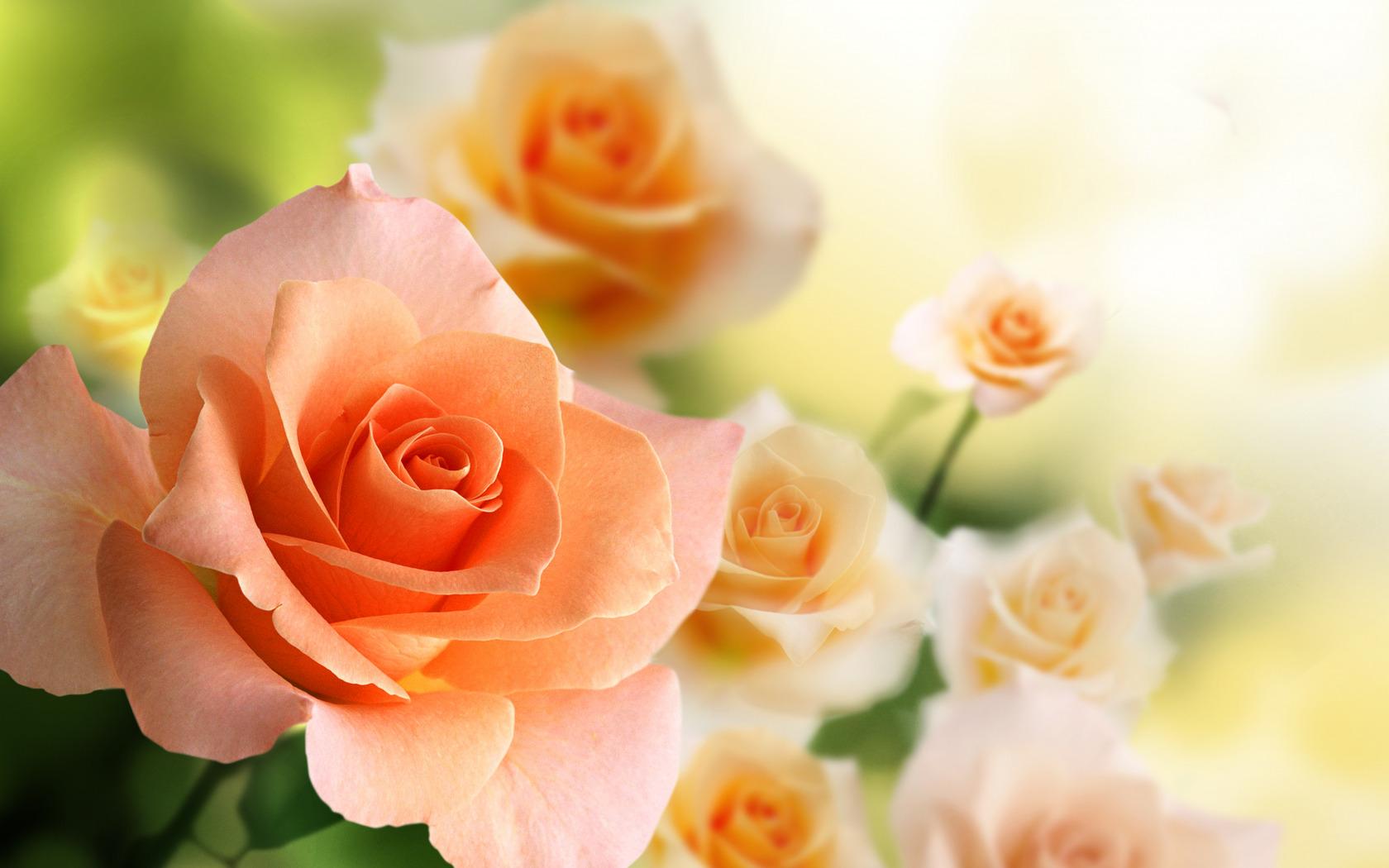 выбор красивые картинки с цветы немолодых леди