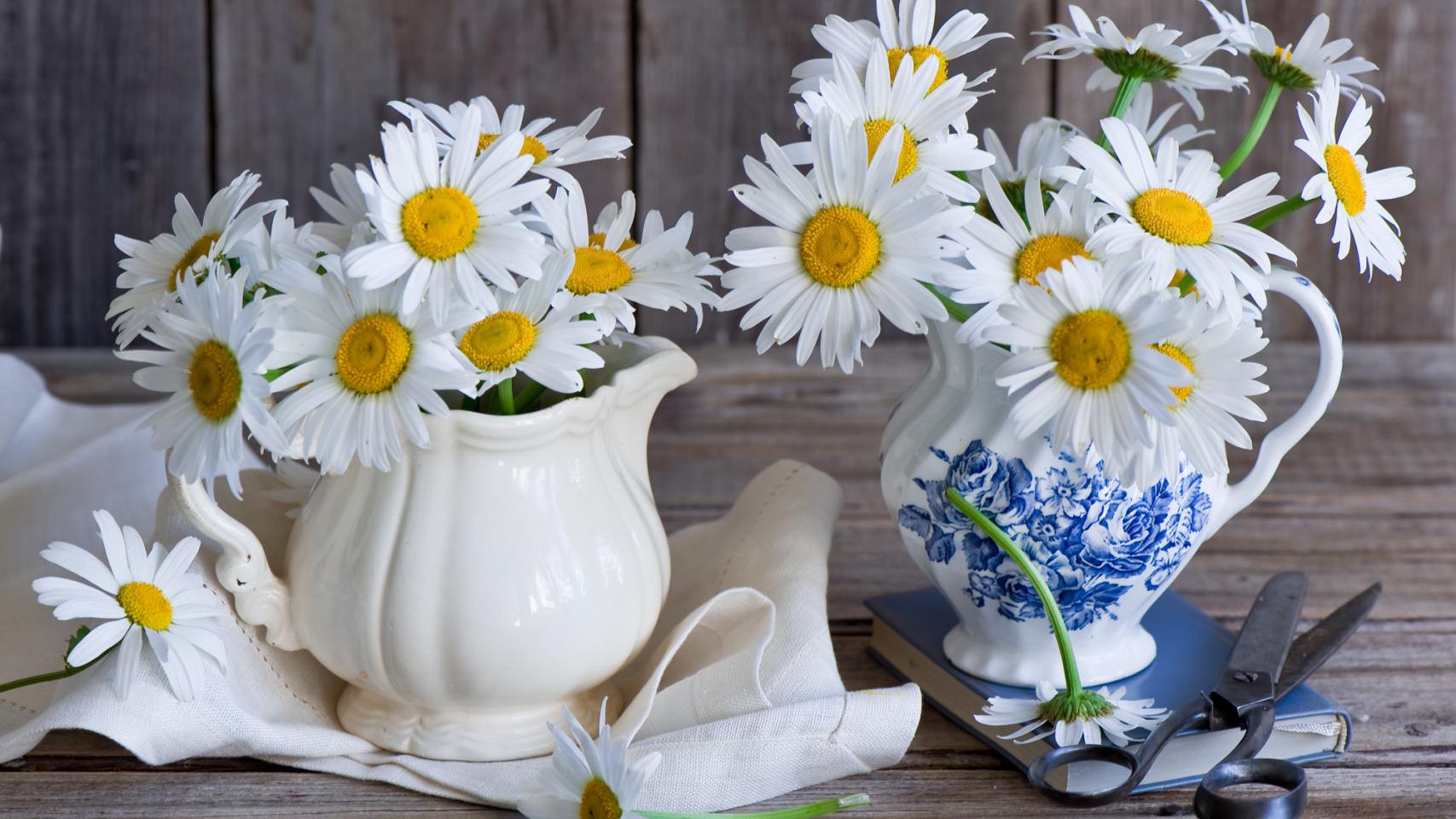 Рамка, открытка цветы ромашка