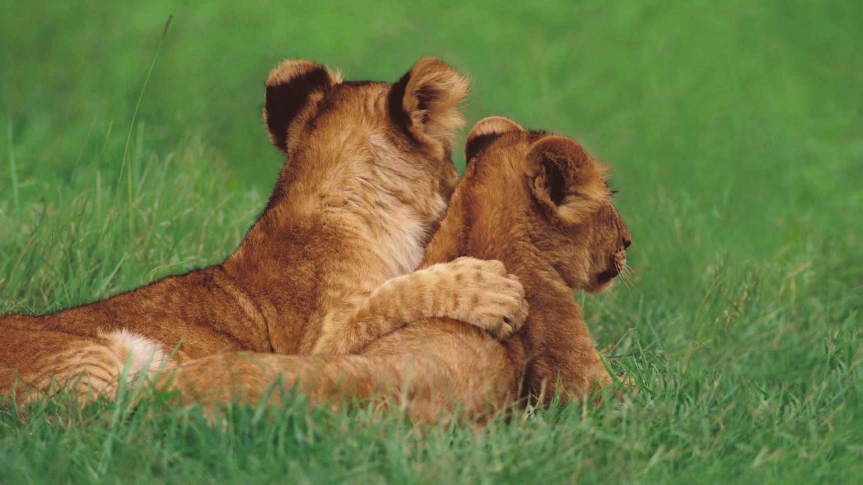 Триколор, животные любовь открытки