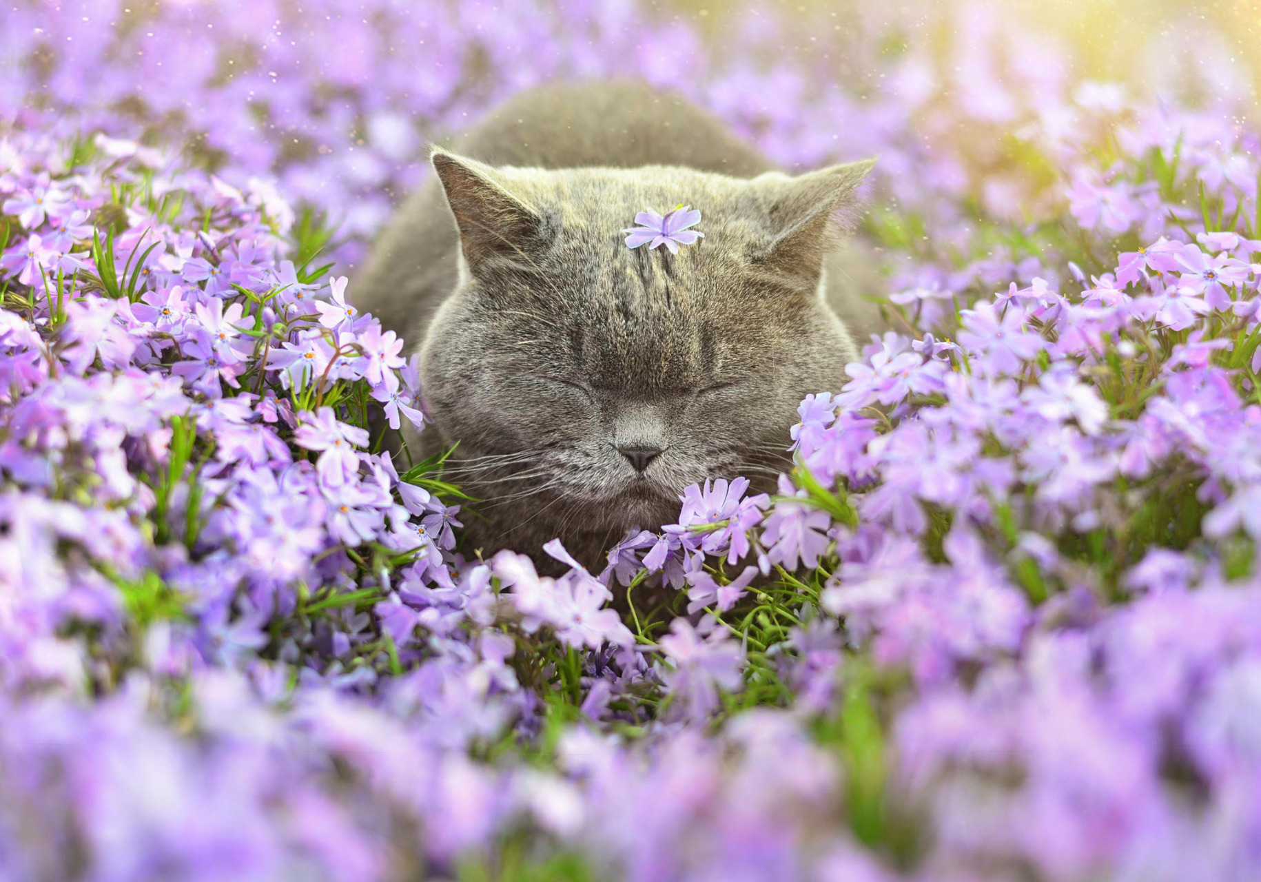 Цветы спят