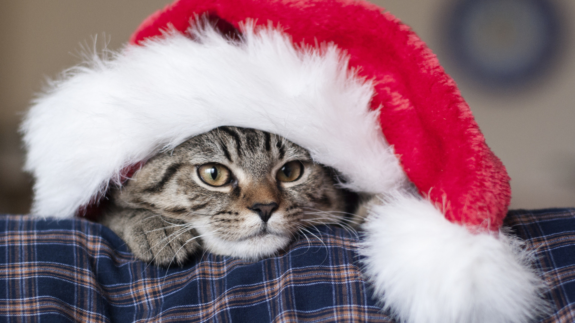 Кот под шапкой  № 3059123 без смс