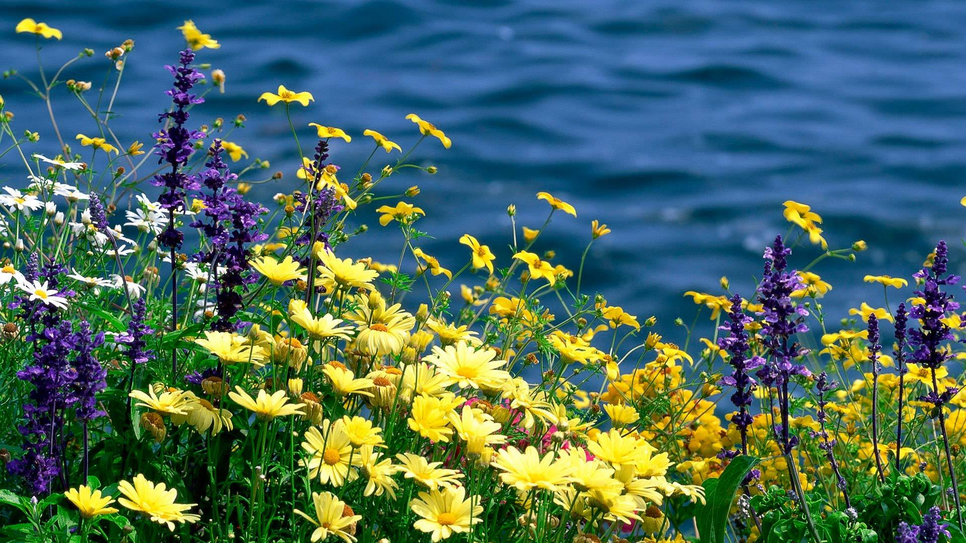 Картинки цветы лето для рабочего стола