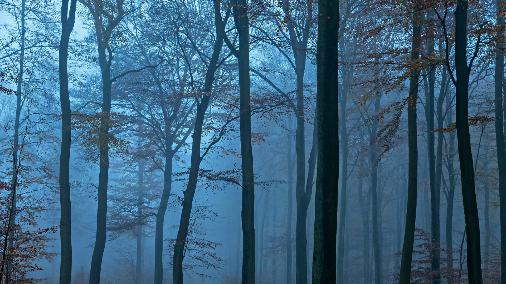 обои на рабочий стол лес в тумане hd № 252011  скачать
