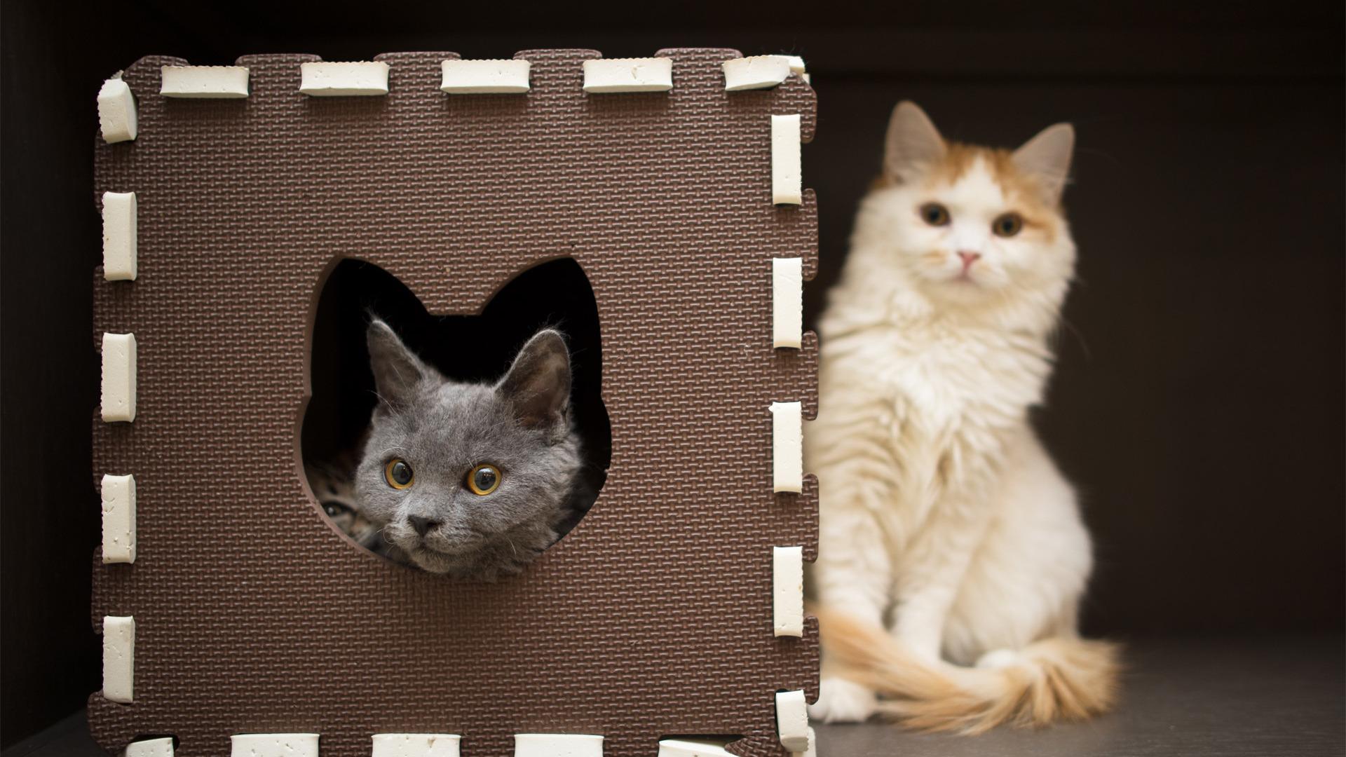 Картинки фокус, домик, морда, размытость, кошки - обои 1600x.