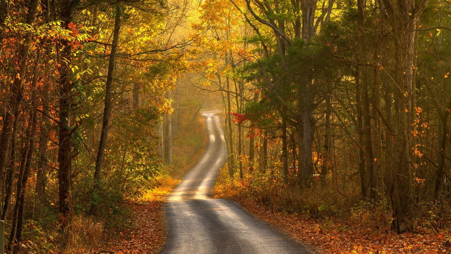 Осень лес дорога природа пейзаж