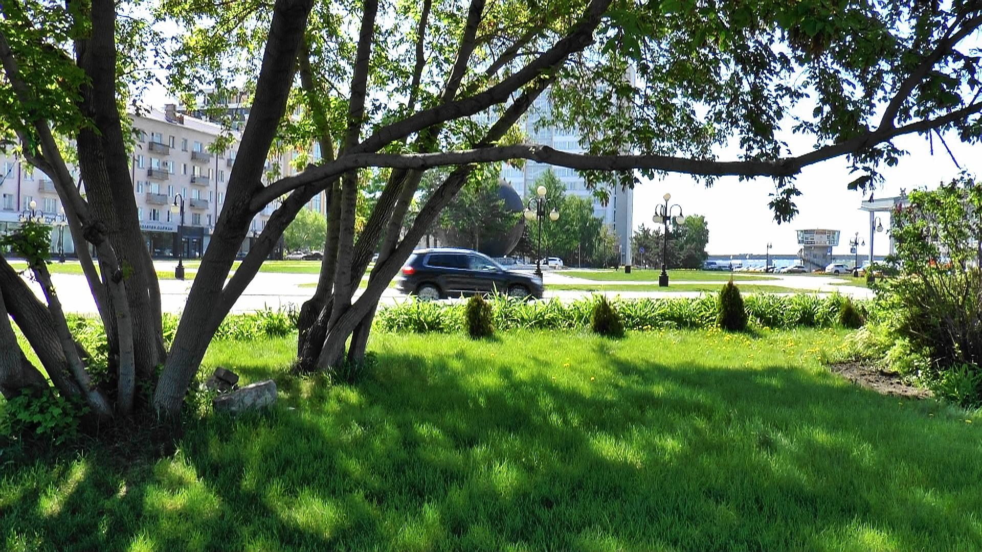 картинки деревьев на улицах уйдут твои невзгоды