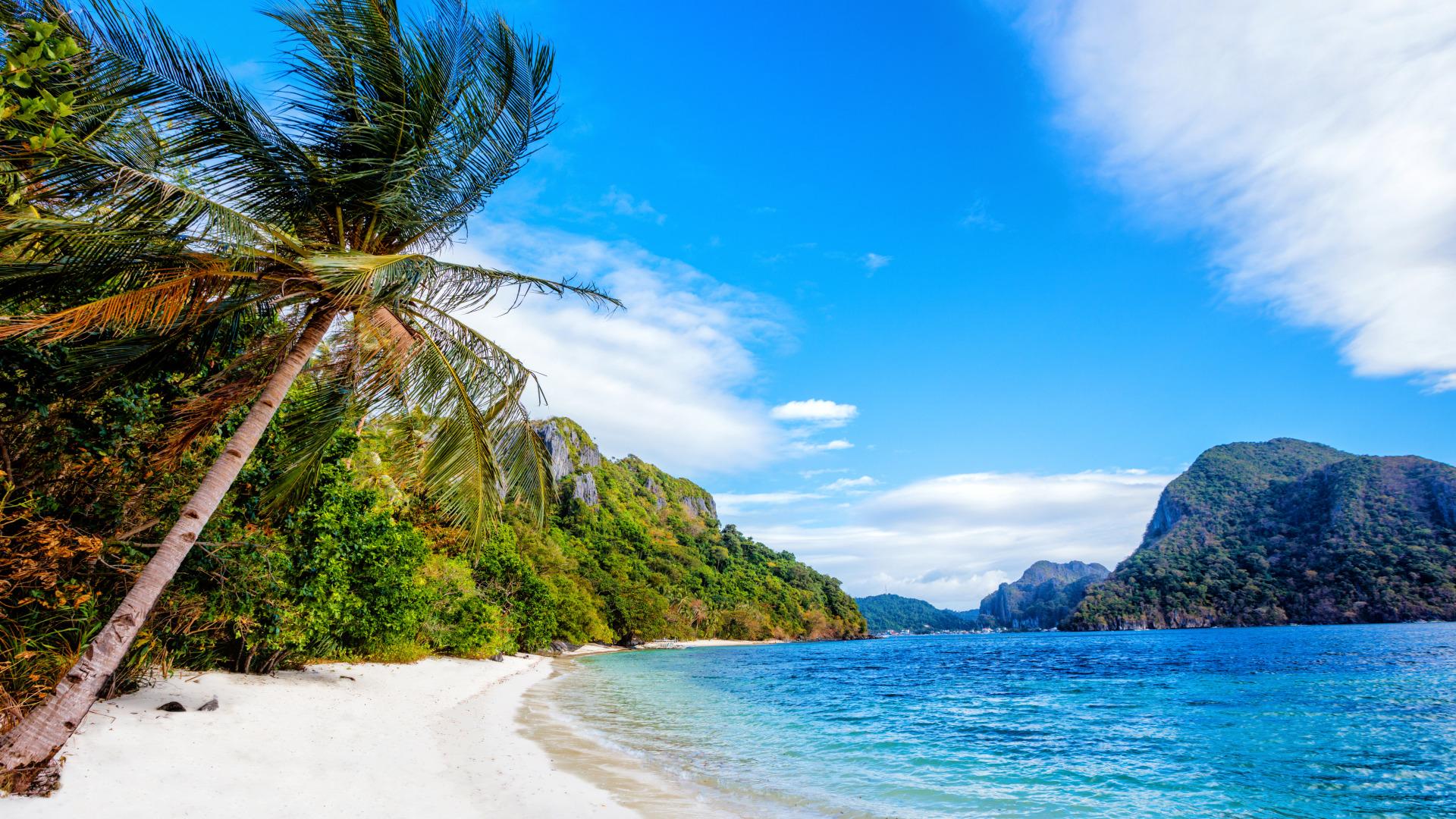 Картинки море горы пальма