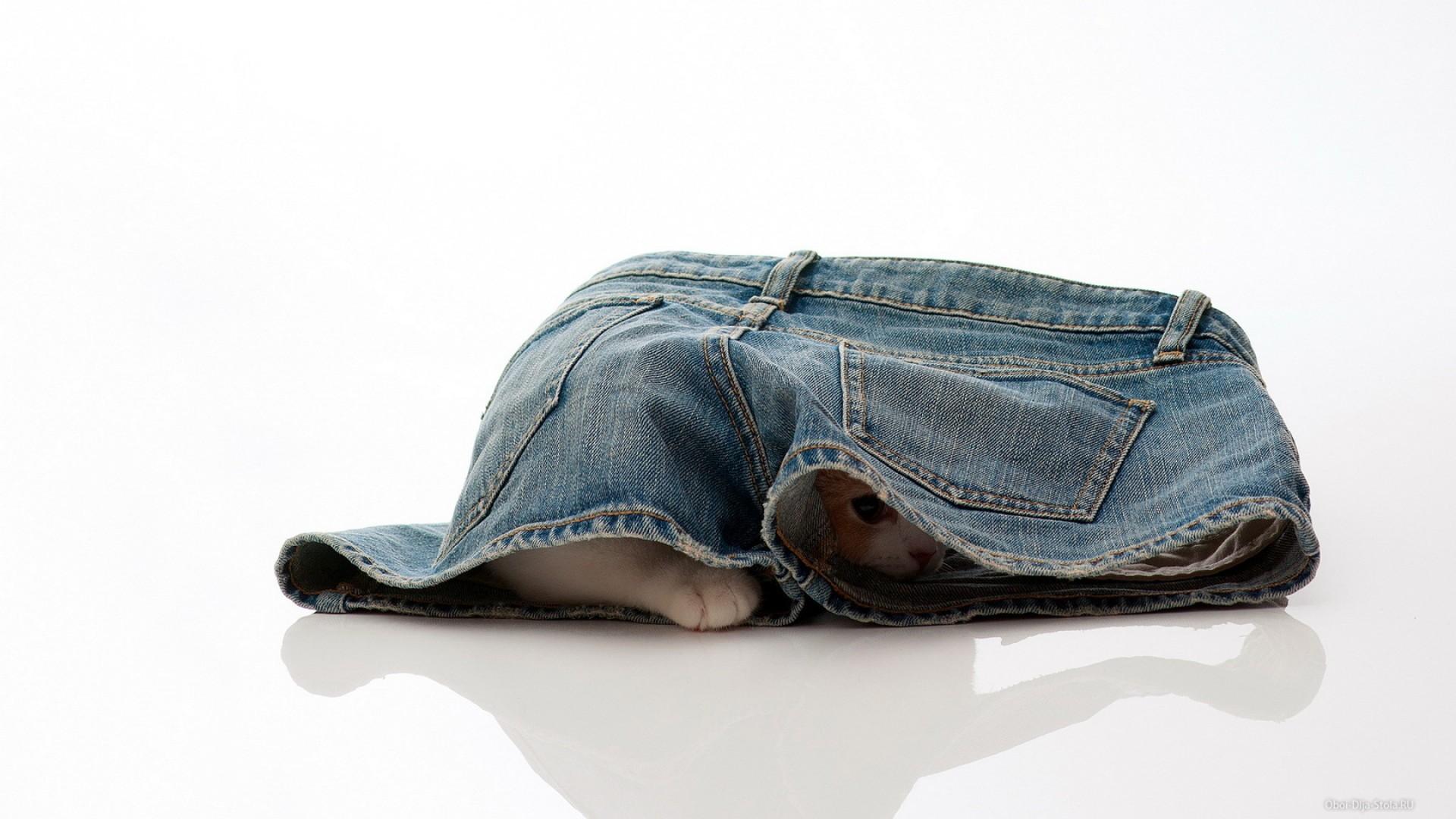 премии лучшую картинки котят в джинсах вам