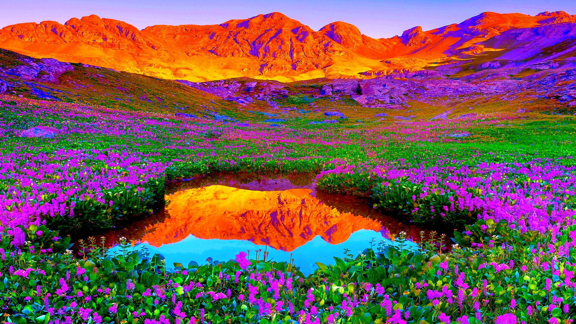 фото горы цветы