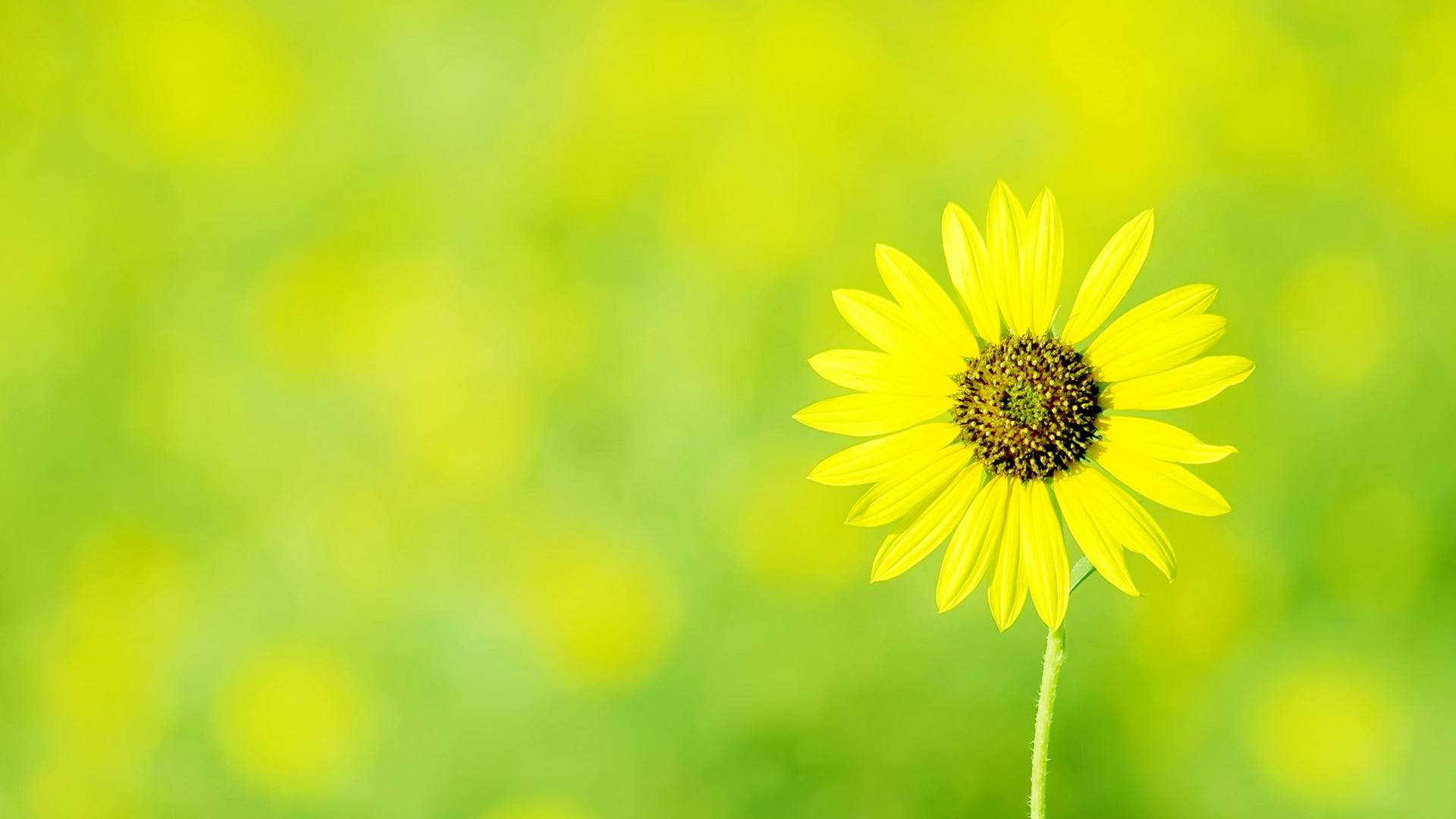 фотографий картинки на рабочий стол зеленый желтый часто можно встретить