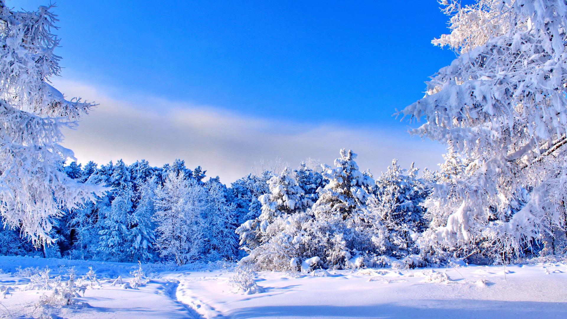 Картинка на рабочий стол зимний день