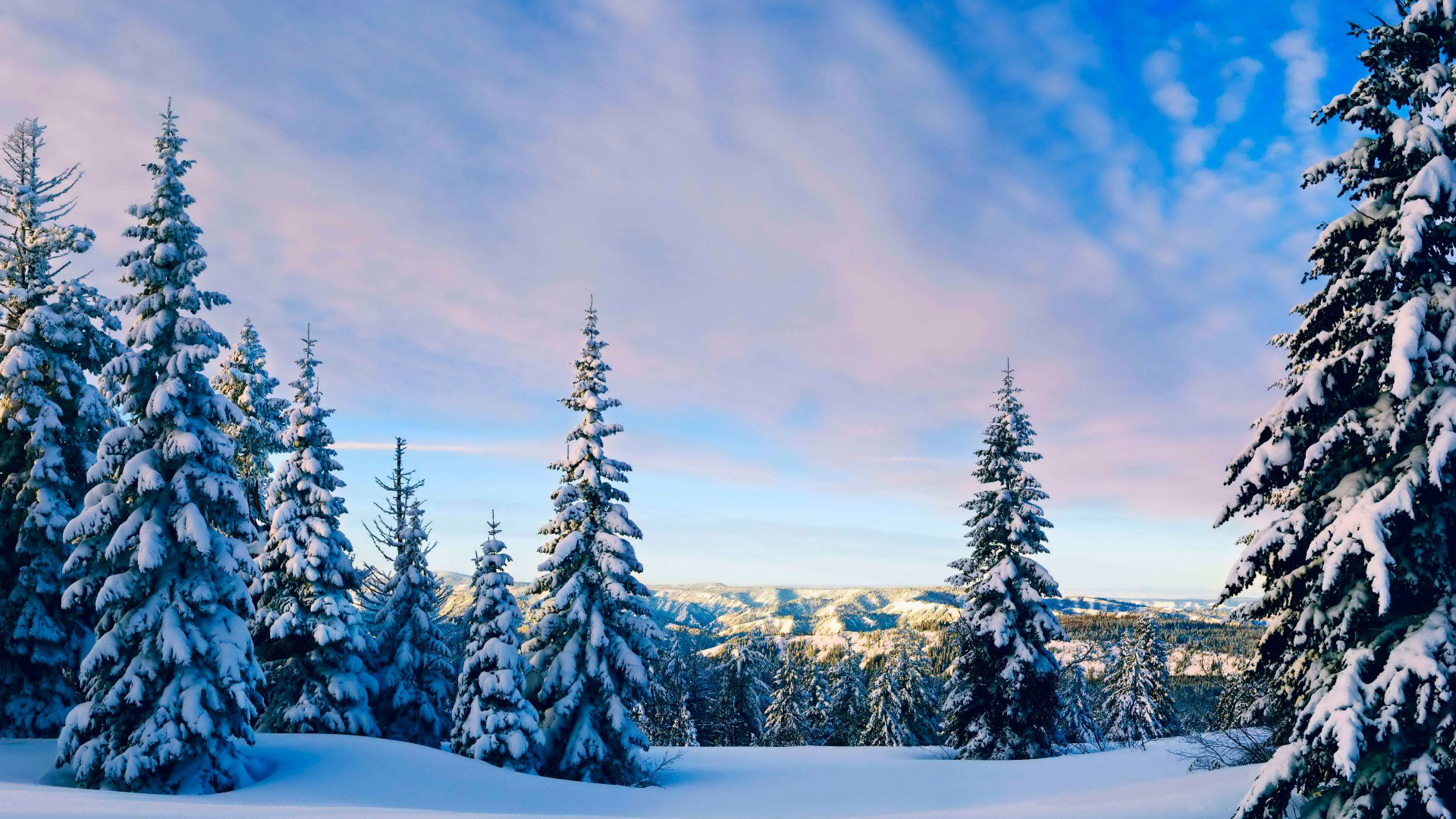 природа лес деревья ели гора облака небо  № 2757534 бесплатно