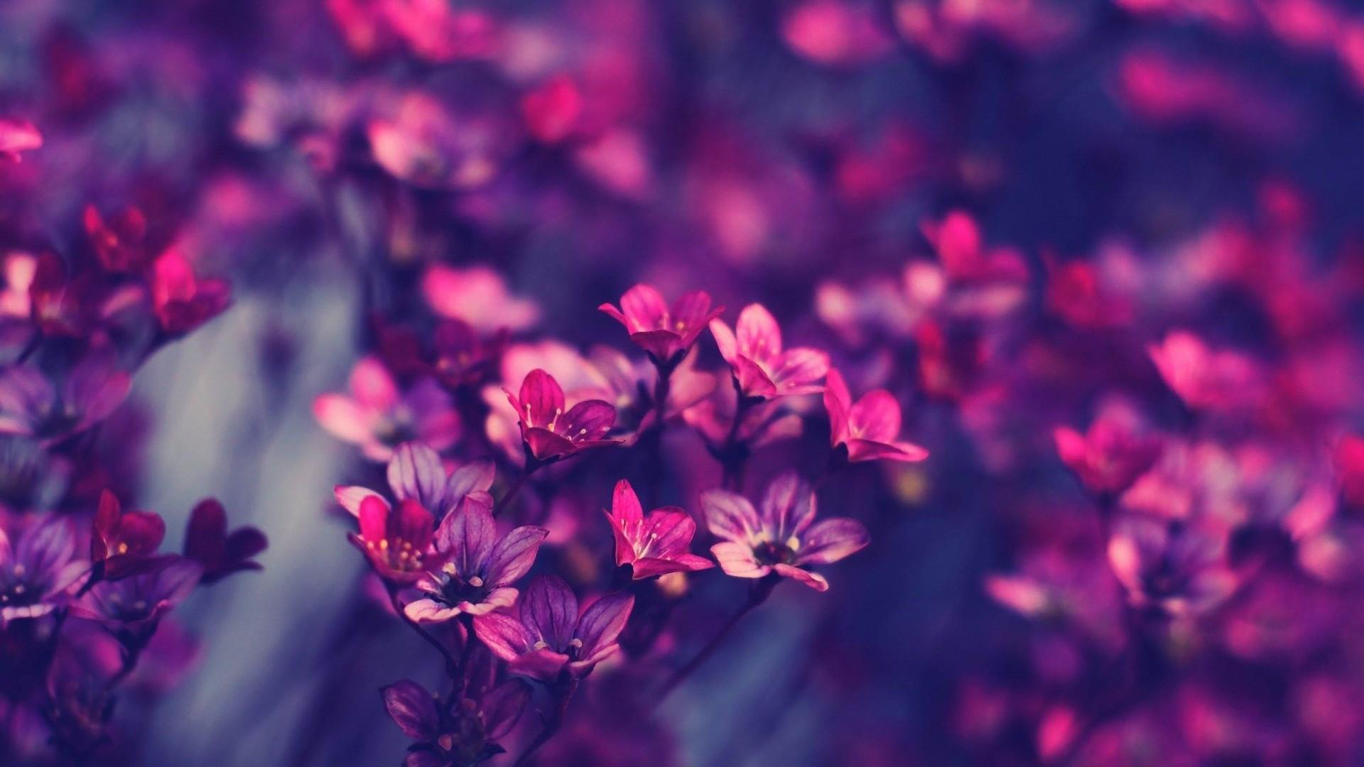 Fotos de flores para salvapantallas 84
