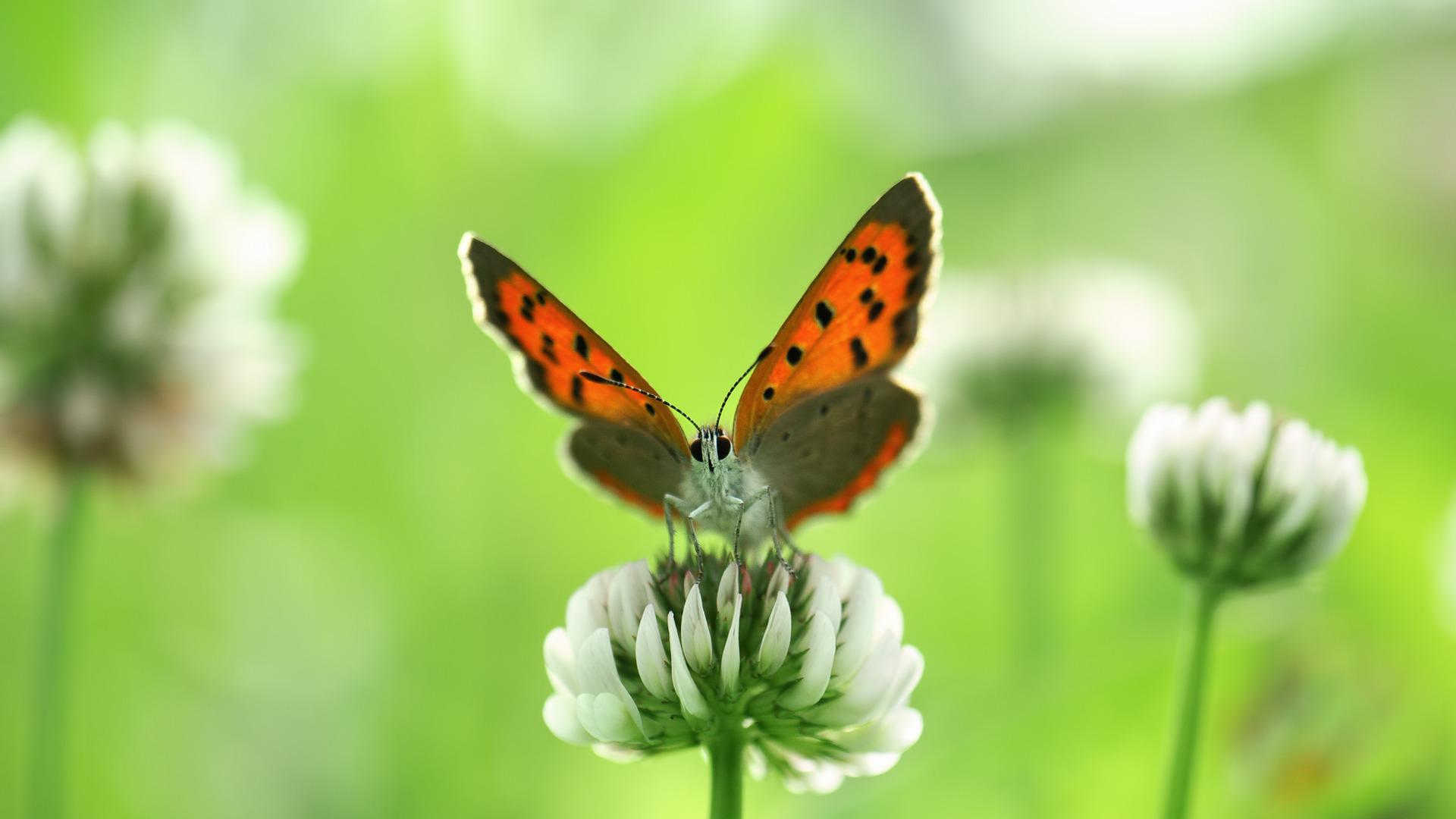 бабочка цветы опыление  № 3353549 загрузить