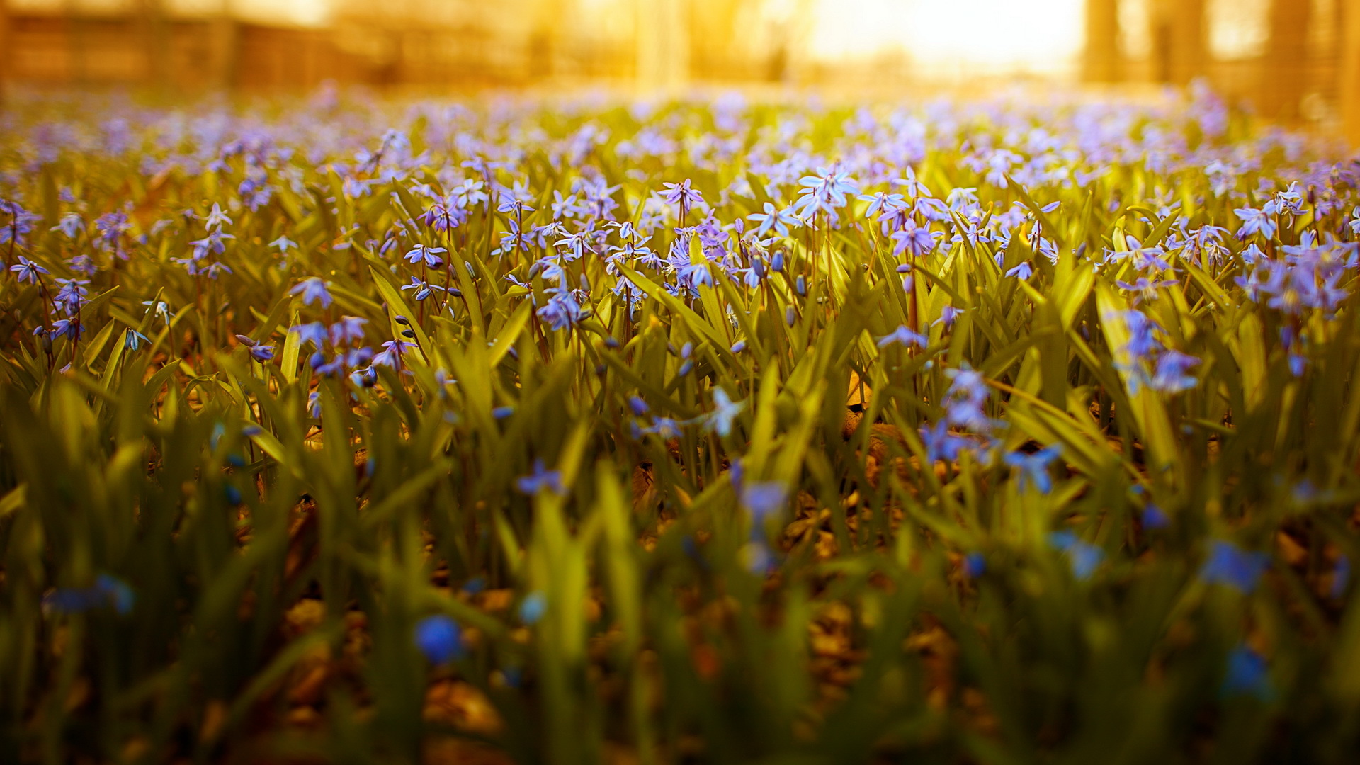фиксик-отличника, фото на рабочий стол весна солнце заказывала для себя