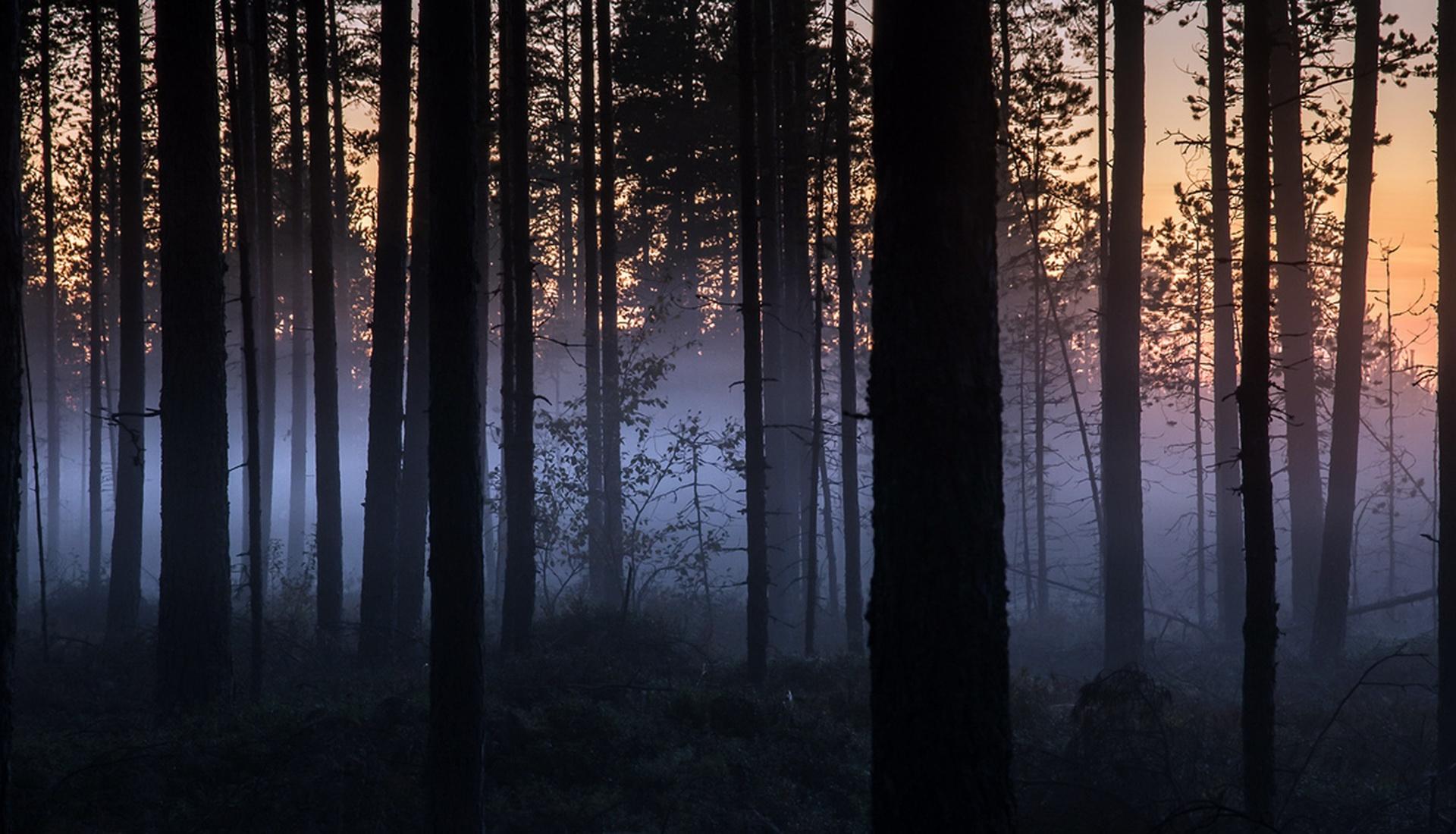 Ночевка в лесу.